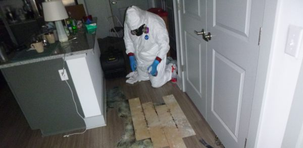 biohazard contamination cleanup