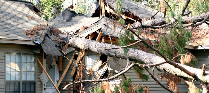 tree damage restoration